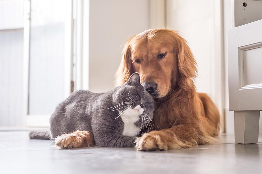 Kako-odabrati-pod-za-kućne-ljubimce