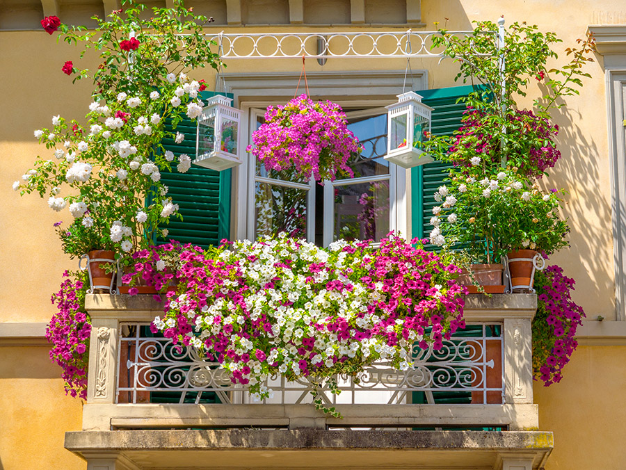 cveće-na-terasi-i-balkonu-saveti-za-održavanje